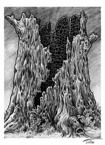 Faeries-burned-out-tree